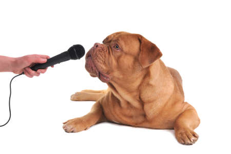 dog rock: Taking interview from a dog