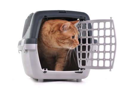 Humane: Cat looking out cautiously of its cage Stock Photo