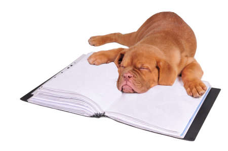 Tired puppy fall asleep after hours of studying photo