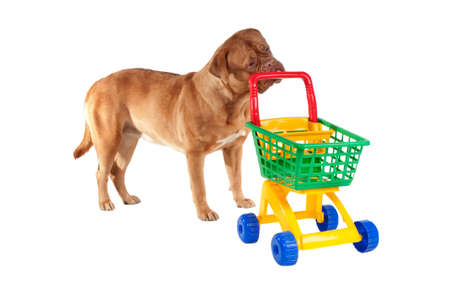 Puppy is going shopping in the Supermarket photo