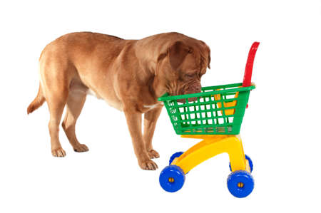 Puppy inspecting a shopping cart photo