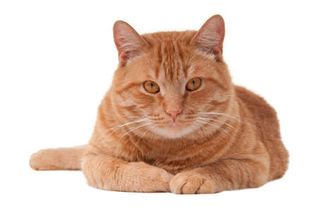 paw smart: Ginger cat is lying on the floor and resting