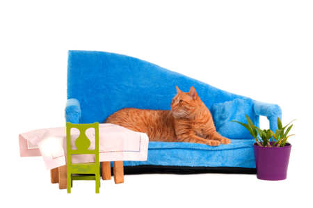 Cat lying on blue sofa is expecting guests for dinner photo