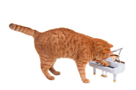 Kitten is playing on a toy piano photo