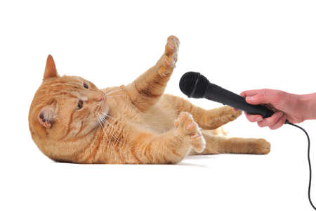 Cat doesnt want to give interview photo