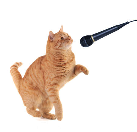 Kitten is Performing on the scene with a microphone photo