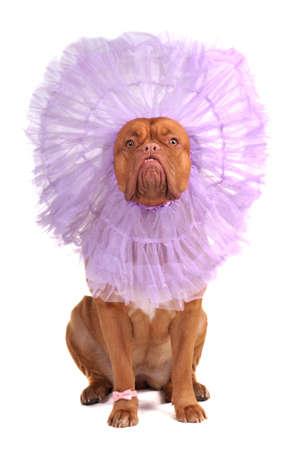 eigenaardig: Hond het dragen van eigenaardige hoed op haar hoofd