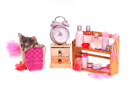 Sleepy Chihuahua puppy in a bucket with body care accessories photo
