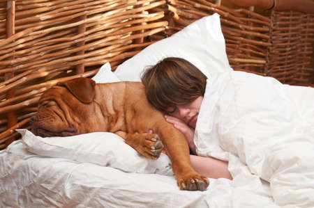 dogue de bordeaux: Woman and her dog of Dogue De Bordoux breed comfortably sleeping in the bed
