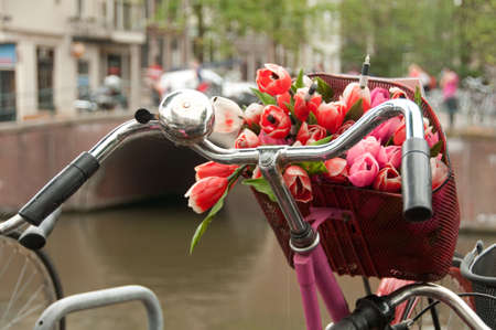 Bicycle with a basket full of tulips parked in Amsterdam photo