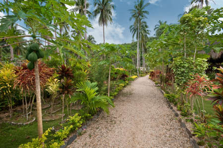 Alley covered with pebbles in a tropical garden photo