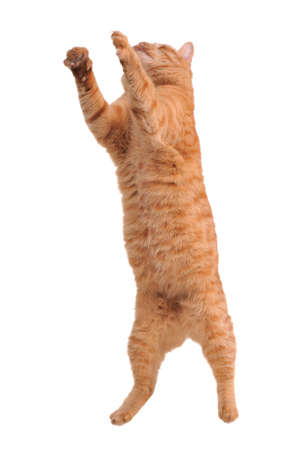 Cat caught in jumping action photo