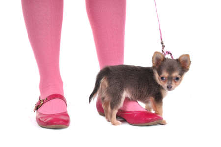 stockings feet: Very Small Dog in front of girls feet