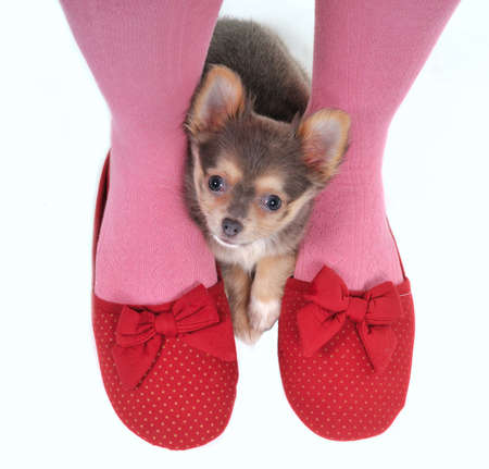 stockings feet: Small Puppy Hidden between girll legs
