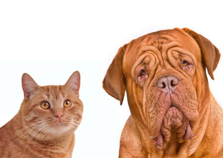 Close-up portrait of a cat and dog (kitten and puppy), isolated on white background photo