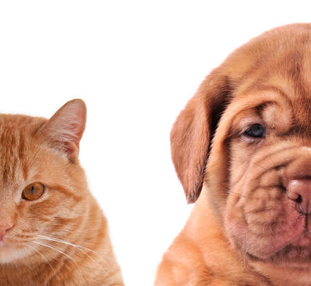 brown and black dog face: Cat and Dog - half of muzzle close up portraits isolated on white Stock Photo
