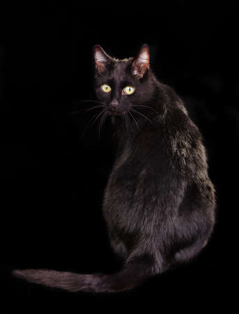 aggressiveness: Back view of black cat sitting on black background with face turned to the viewer Stock Photo