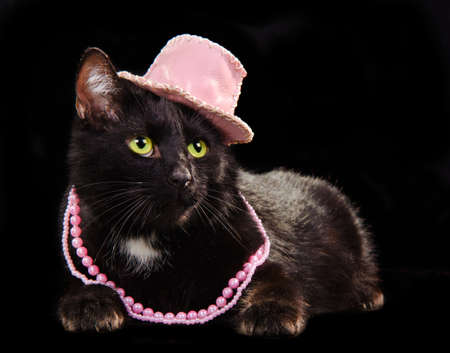 Glamorous black cat wearing pink hat and beads lying against black background isolated