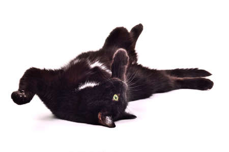 Black kitten playing lying on its back upside down isolated on white background photo
