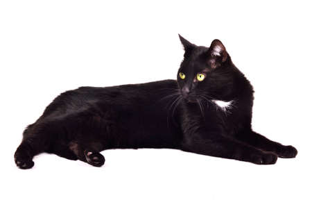 Black green-eyed cat lying isolated on white background photo