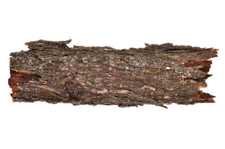 log on: Close-up of isolated broken stub log bark with wooden texture isolated on white background Stock Photo