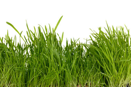 Fresh green grass isolated on white Stock Photo - 11697234