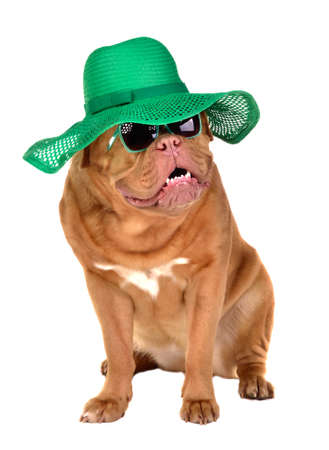 Charming lady dog wearing green straw hat and sun glasses isolated on white background photo