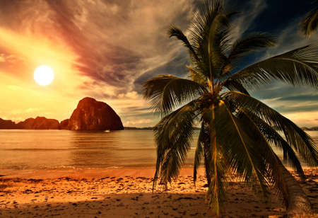 coucher de soleil: Hot Sunset Beach Tripical avec un Palm Banque d'images