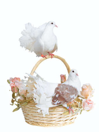 Two white doves alight on a basket with flowers photo