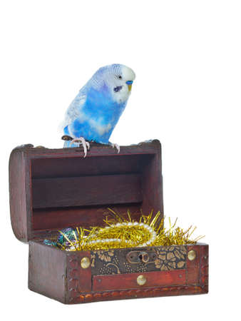 pet valuable: Old treasure chest with pirate parrot