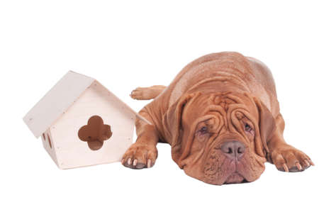 guard house: Tired dog is lying next to a starling house