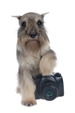 Zwergschnauzer dog with a digital photo camera Stock Photo - 11519536