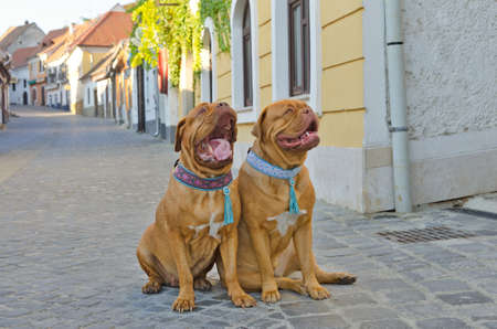 Funny dogs at small city street photo