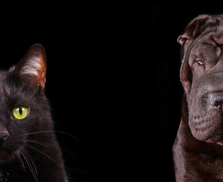 Cat and Dog - half of muzzle close up portraits isolated on black photo