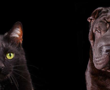 perro furioso: El gato y el perro - la mitad del hocico de cerca retratos aislados en negro Foto de archivo