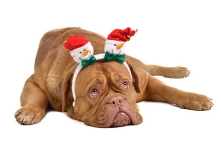 Dog wearing headwewar with funny snowmen, isolated