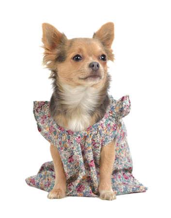 Puppy wearing feminine clothes photo
