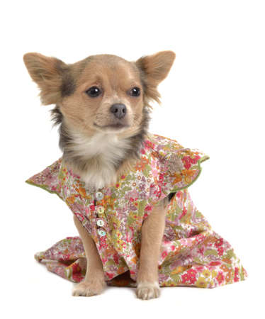 Pet clothes isolated photo