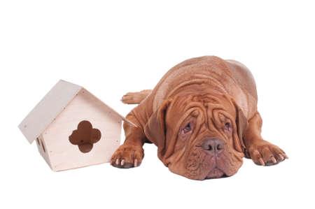 Grand chien avec petite maison isolée Banque d'images