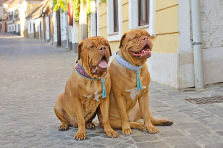 Two dogs with lovely collars sitting on a street photo
