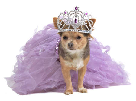 Princess dog with diadema and magnificent dress photo