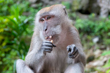monkey nuts: Monkey eating nuts in the forest Stock Photo