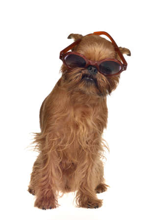 Funny dog with glasses, isolated photo