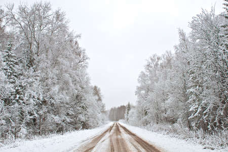 Winter forest and road, Russia photo