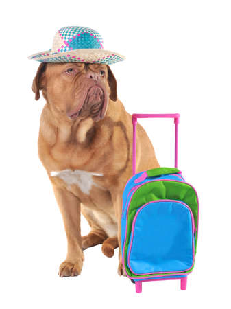 Pet travel concept, studio shot photo