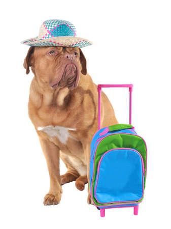 Pet travel concept, studio shot photo