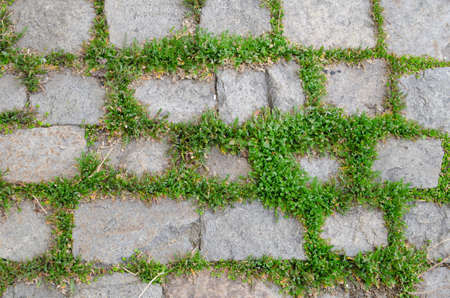 empedrado: Antecedentes de las piedras de la calle entre la hierba