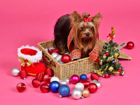 Christmas puppy with balls, new year tree and gift boot against pink background photo