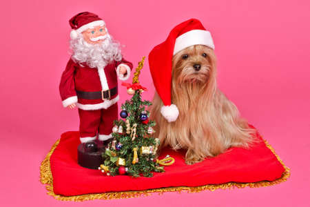 Santa Claus dog and Snow Maiden with New Year Tree against pink background photo