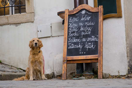 house trained: Restaurant menu board on the street with a dog sitting near by